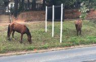Prefeitura afirma que animais soltos na via pública serão encaminhados para o Parque de Exposições