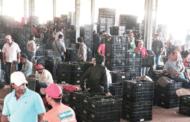 Comercialização na Ceasa de Caratinga movimentou R$ 105 milhões em 2018