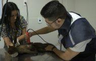 Hospital Veterinário Joaquim Felício CASU realiza atendimento a animais da fauna silvestre