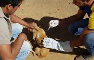 Prefeitura de Santa Bárbara do Leste desenvolve campanha de vacinação contra a raiva animal