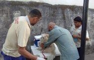 Campanha de vacinação antirrábica é encerrada com 14.509 animais imunizados